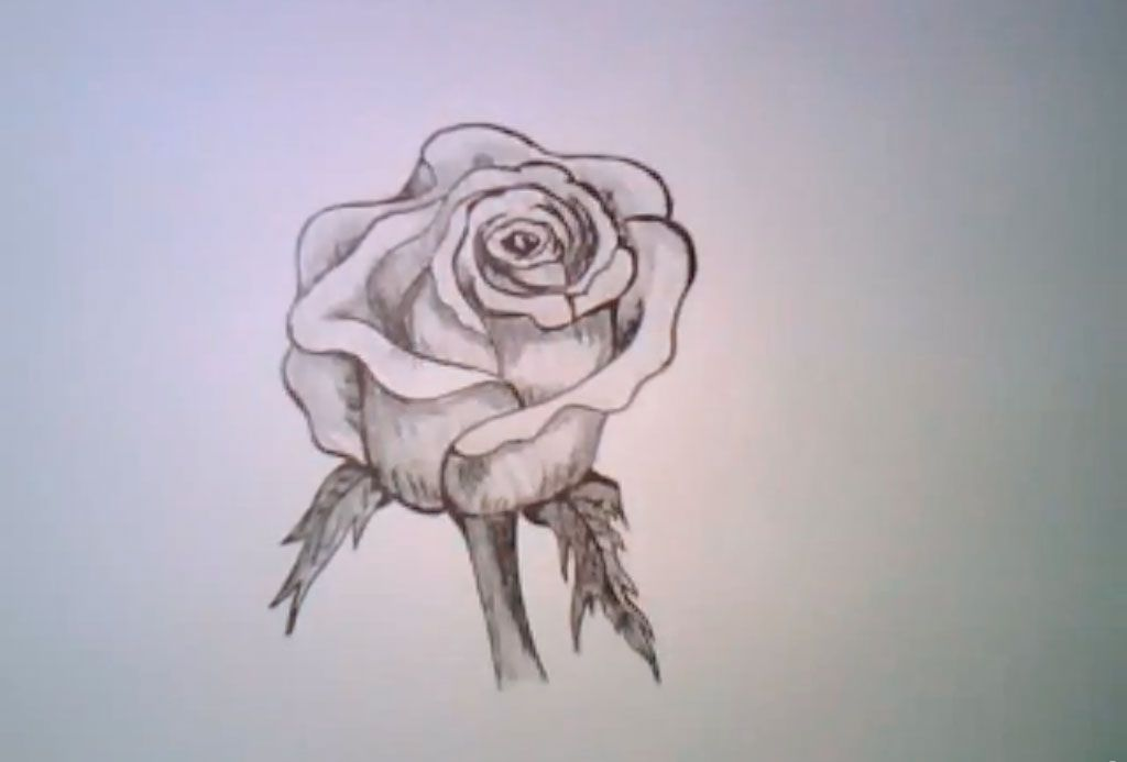 How to draw a realistic rose with a pencil step by step