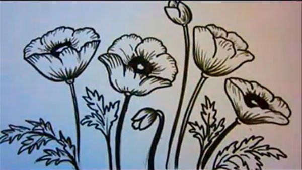 How to learn to draw poppies a pencil step by step