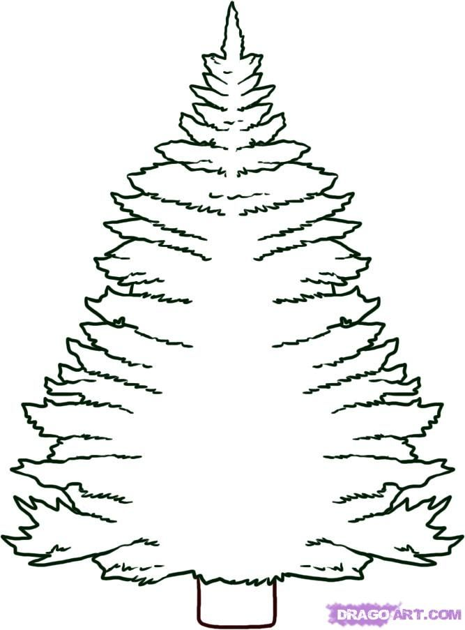 How to draw the Pine step by step