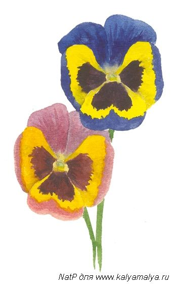 We learn to draw Pansies