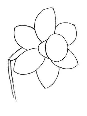 We learn to draw the Carnation 2