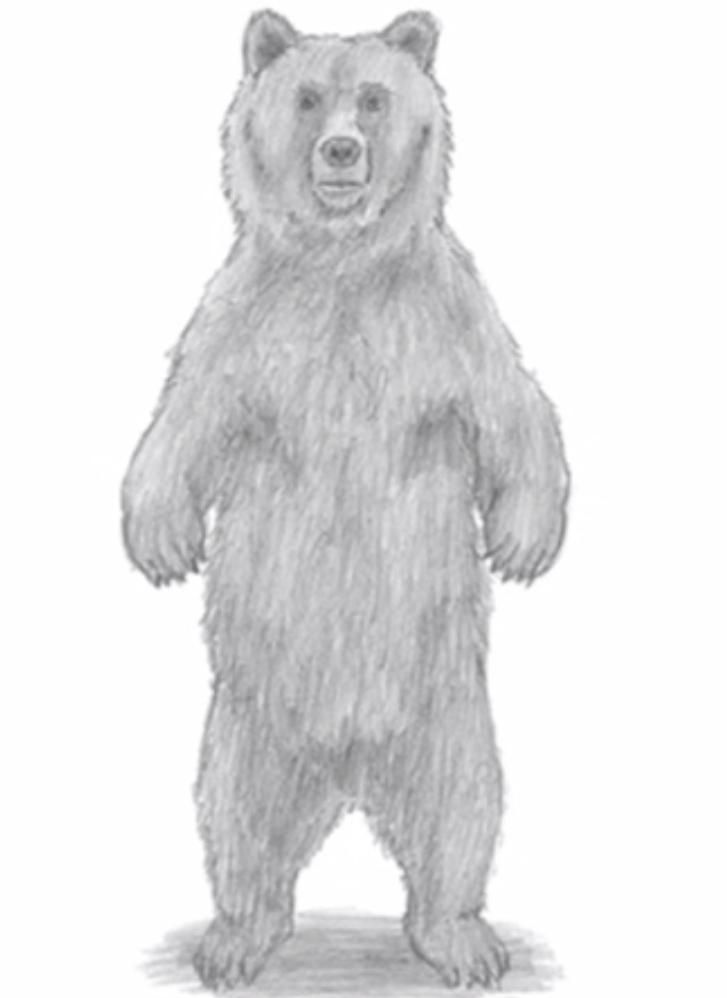 How to draw a bear with a simple pencil on paper
