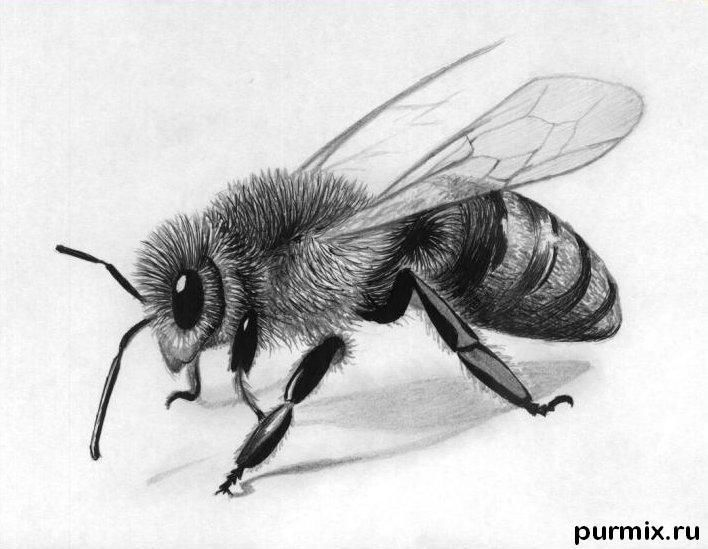 How to draw a realistic bee with a simple karndash