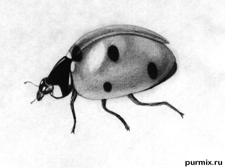 How to learn to draw a ladybug a simple pencil