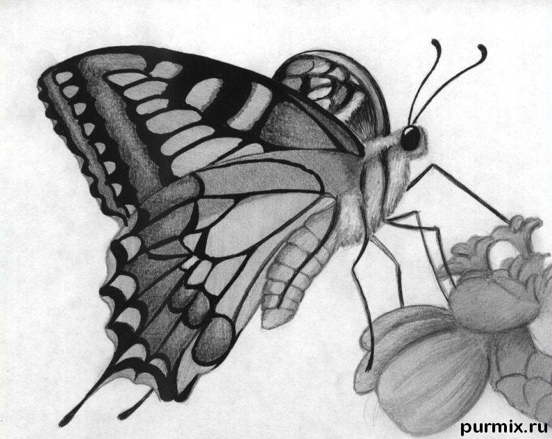 How to learn to draw a butterfly a simple pencil