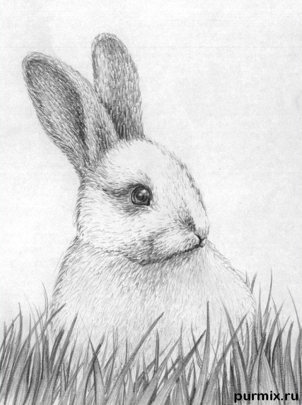 How to learn to draw a rabbit a simple pencil step by step