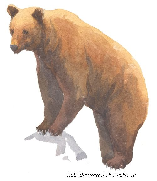 We learn to draw a bear
