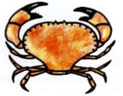 We draw a crab