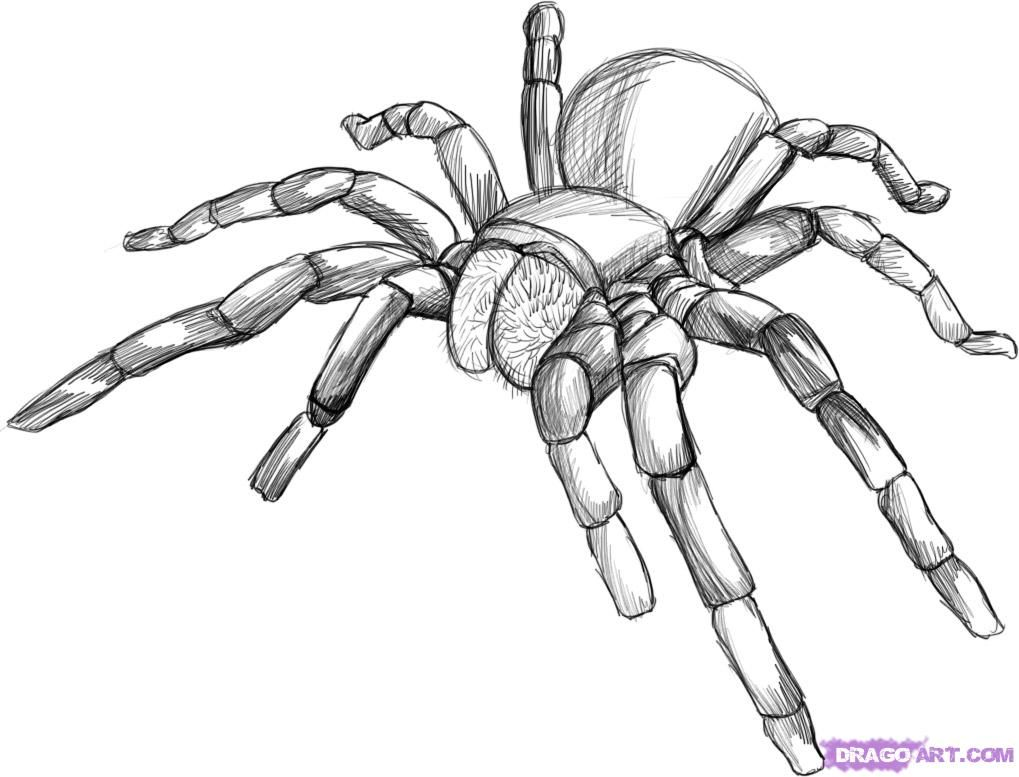 How to draw the Tarantula step by step