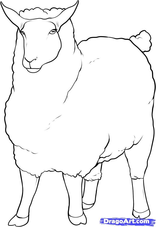 How to draw a sheep with a pencil step by step