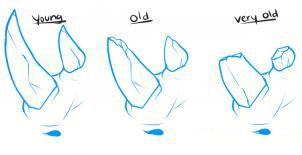 How to draw a woodpecker step by step 2