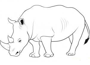 We draw a rhinoceros step by step