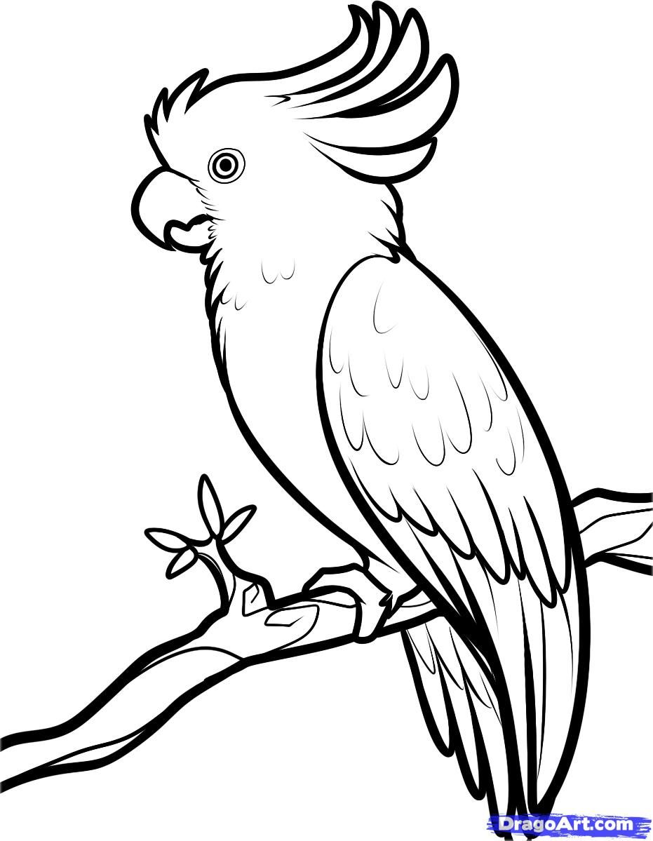How to draw a parrot of the Cockatoo step by step