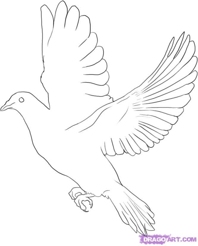 How to draw a pigeon step by step