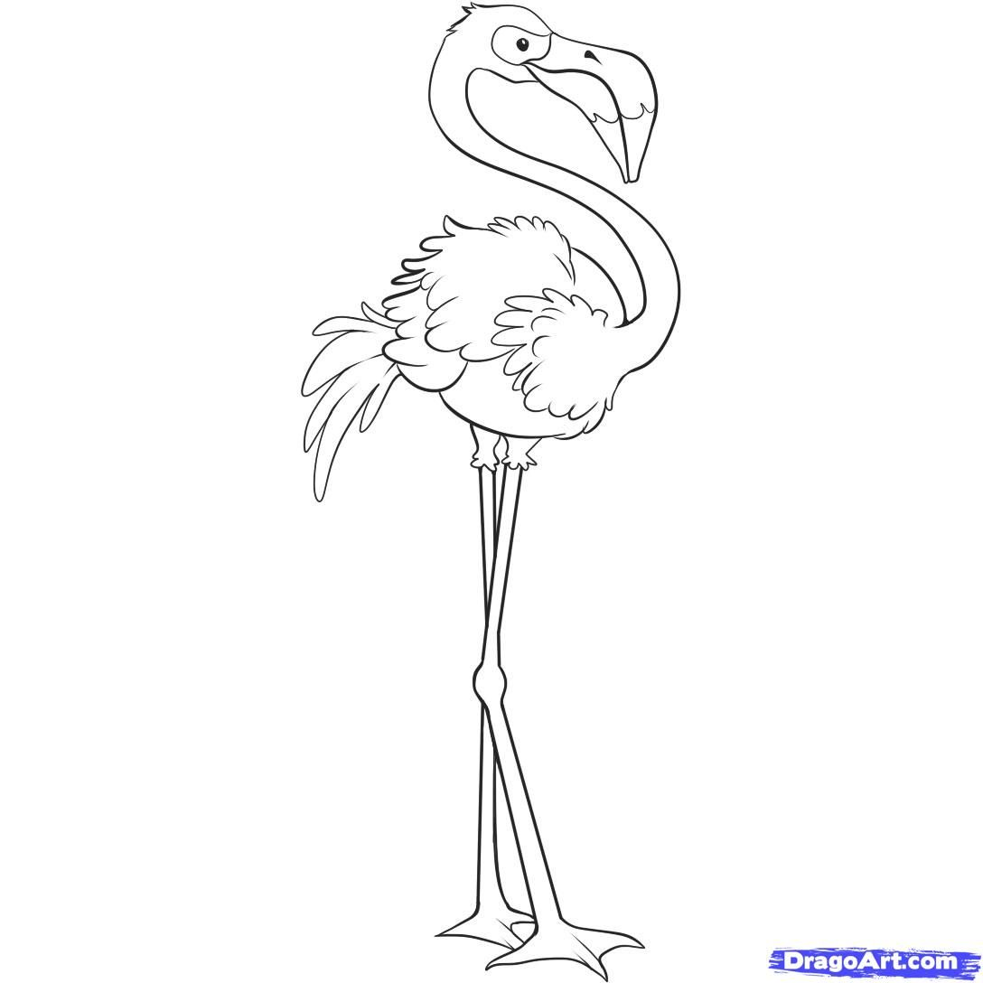 How to draw the Flamingo step by step
