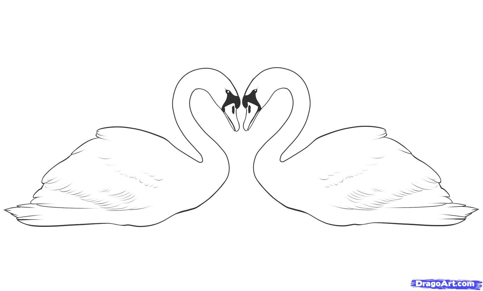 How to draw two swans