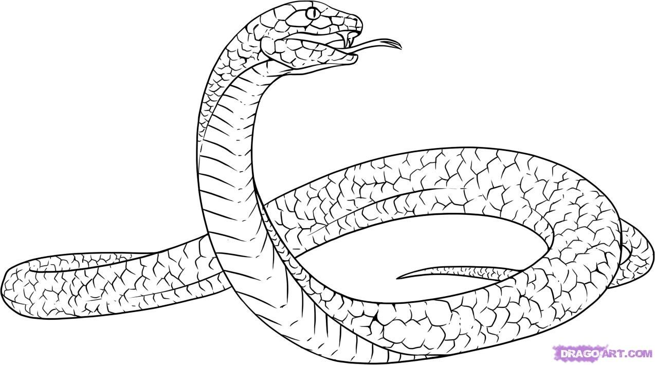 How to draw a snake the Black Mamba