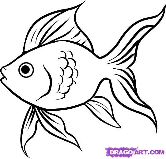 How to draw the Goldfish step by step