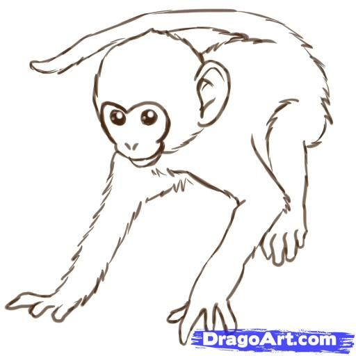 How to draw the monkey step by step