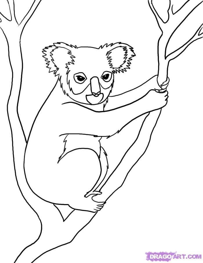 How to draw a koala on a tree step by step