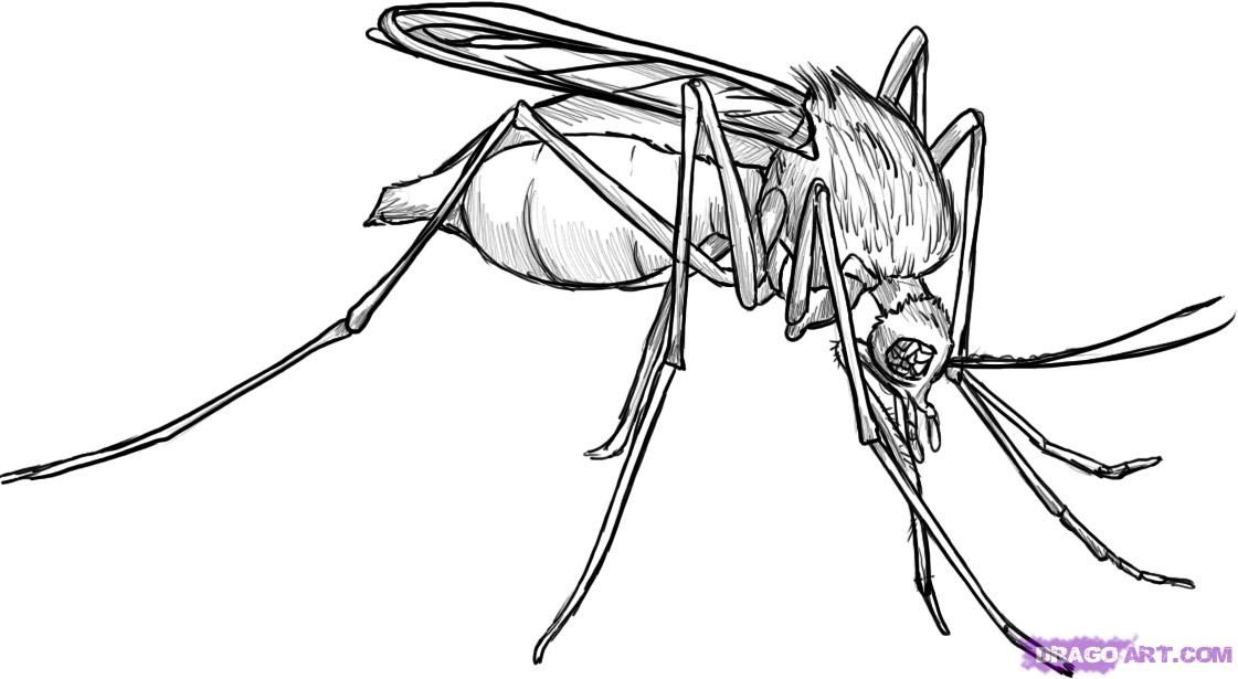 How to draw a mosquito step by step