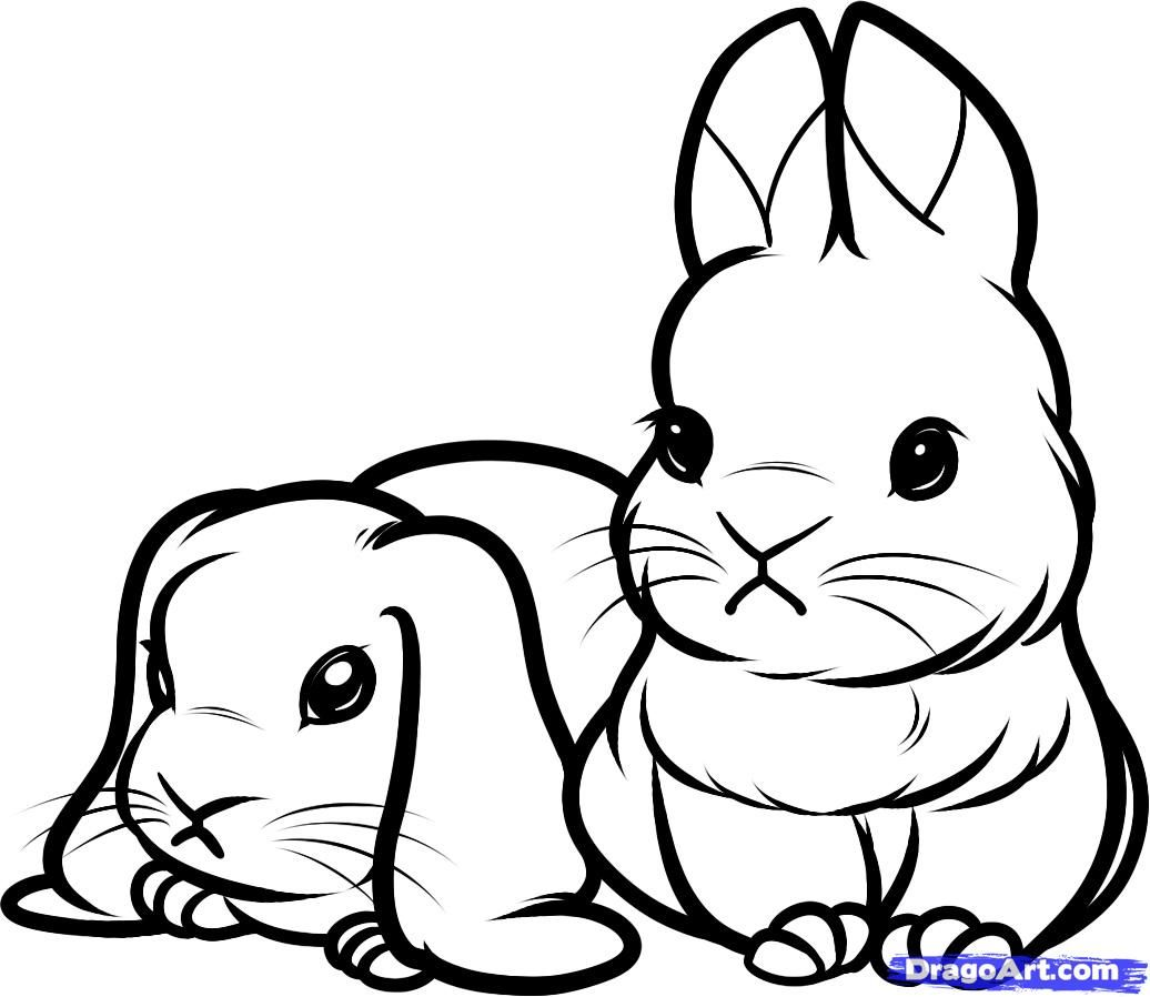 How to draw little rabbits, hares step by step