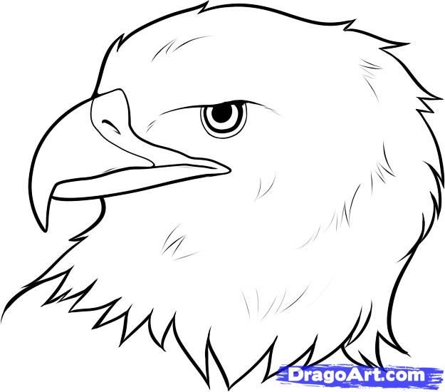 How to draw the head of an eagle step by step
