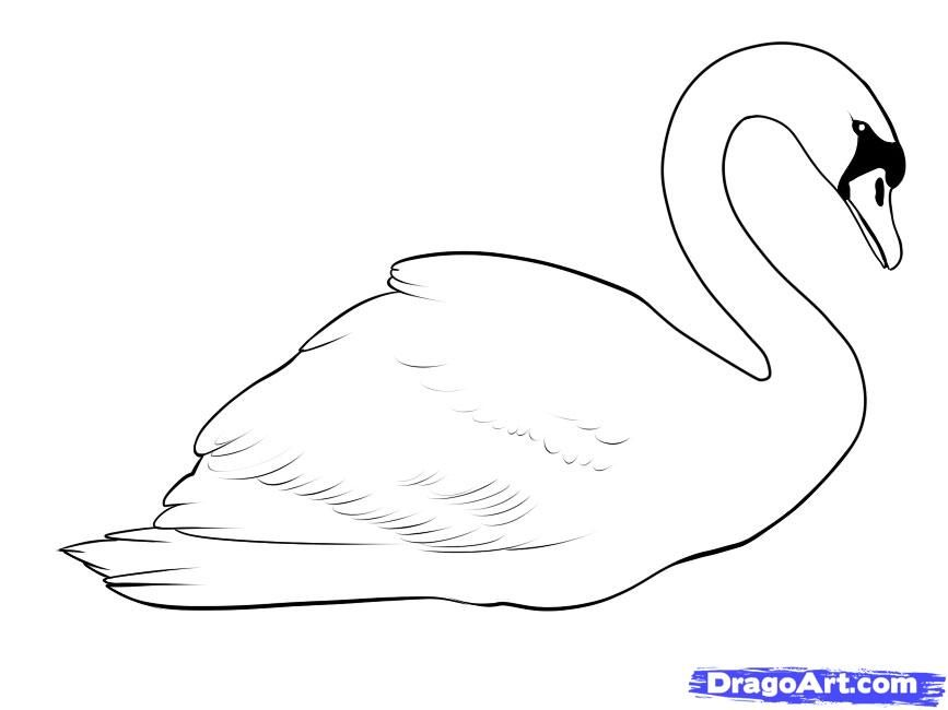 How to draw a swan step by step
