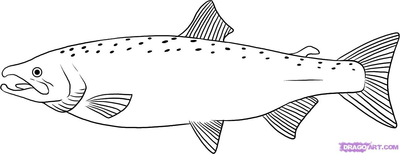 How to draw a salmon with a pencil step by step