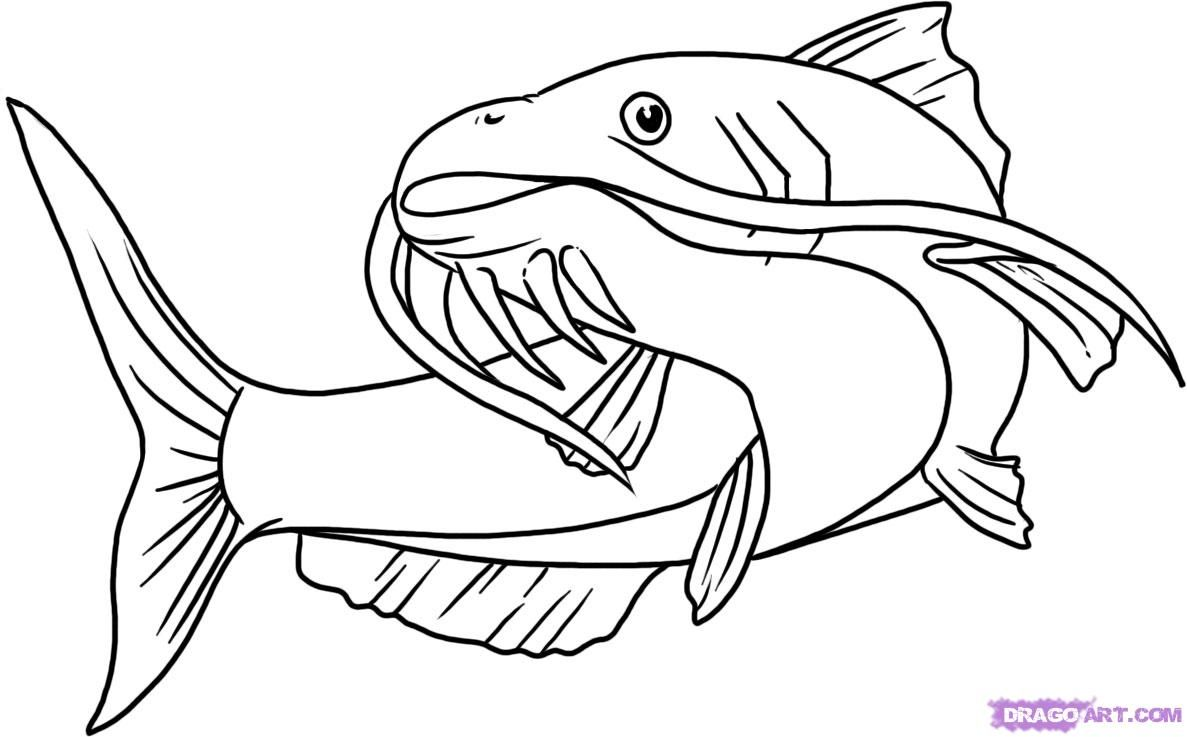 How to draw a catfish with a pencil step by step