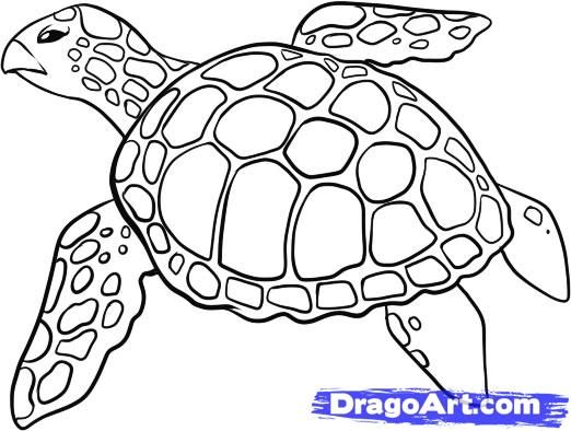 How to draw a turtle with a pencil step by step