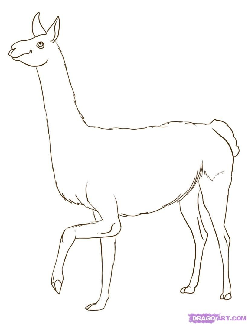 How to draw a lama with a pencil step by step
