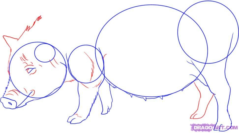 How to draw a chipmunk step by step 5