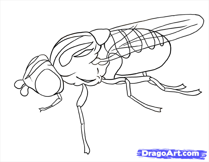 How to draw a fly with a pencil step by step