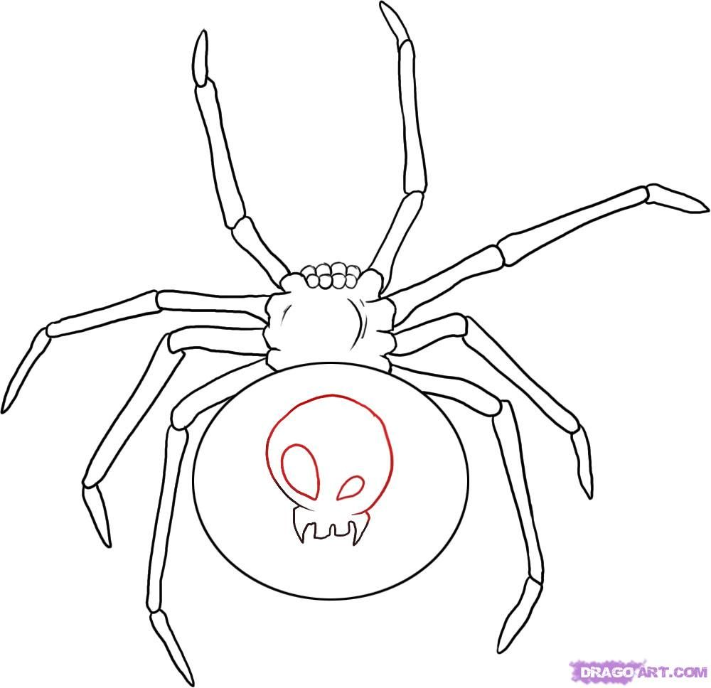 How to draw a spider the Black widow step by step