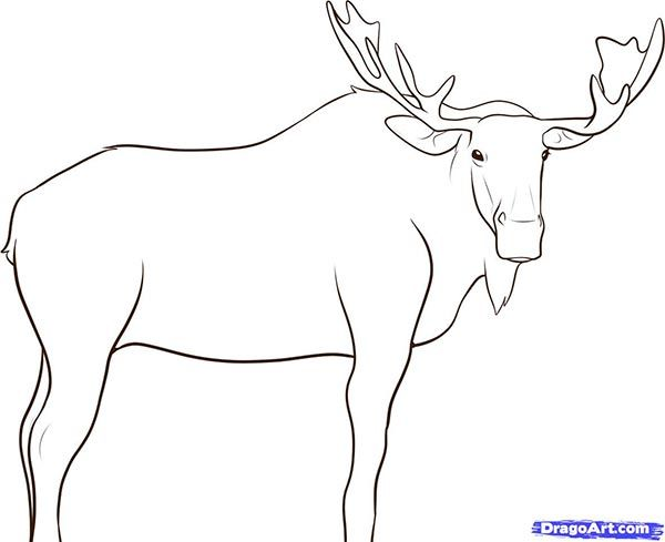 How to draw the Elk with a pencil step by step