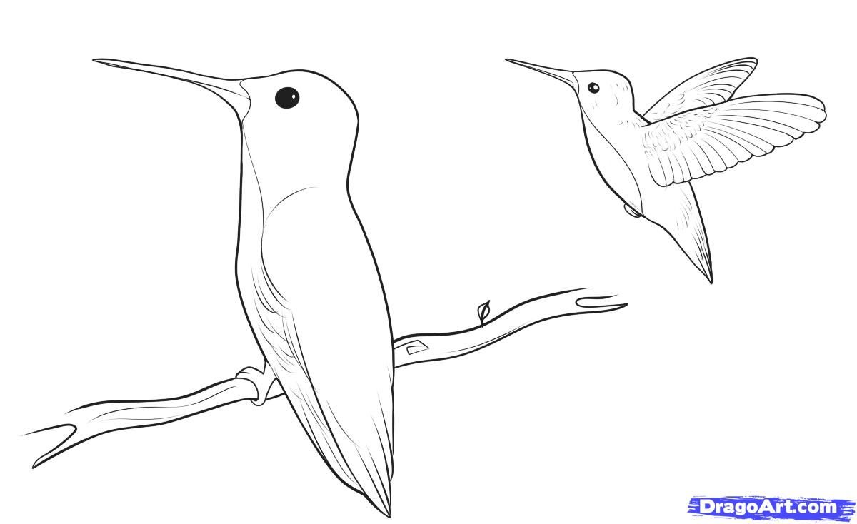 How to draw the Humming-bird with a pencil step by step