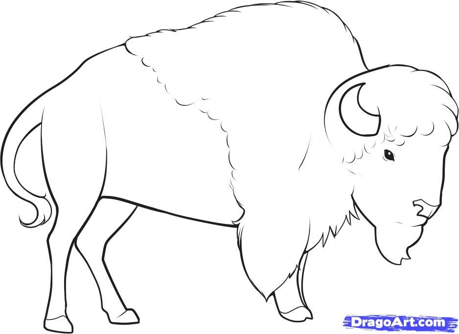 How to draw the Bison with a pencil step by step