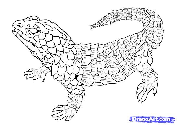 How to draw the Lizard with a pencil step by step