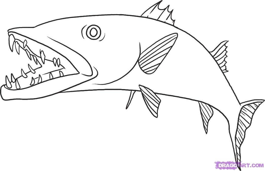 How to draw fish the Barracuda with a pencil step by step