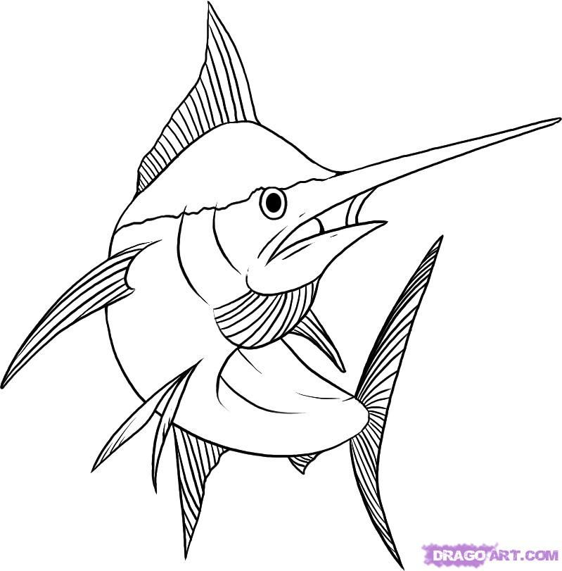 How to draw the Sword fish with a pencil step by step