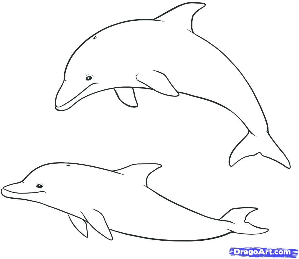 How to draw dolphins with a pencil step by step