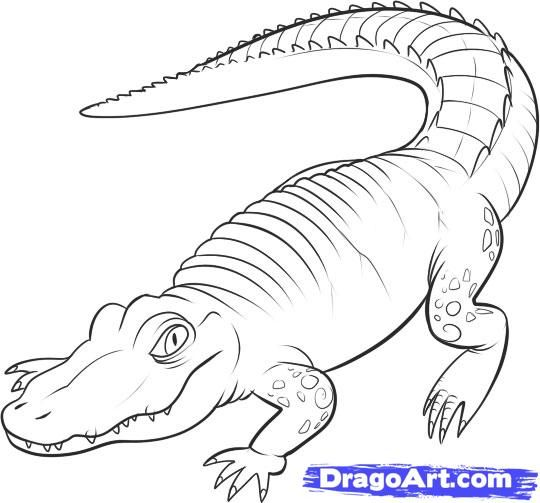 How to draw the Alligator with a pencil step by step