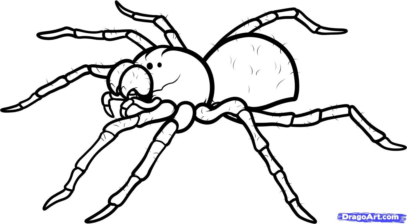 How to draw the Spider with a pencil step by step