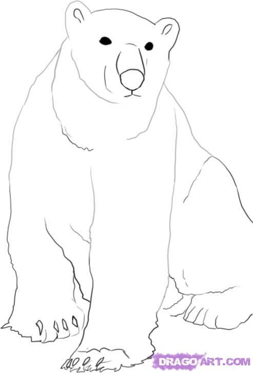 How to draw the Polar bear with a pencil step by step