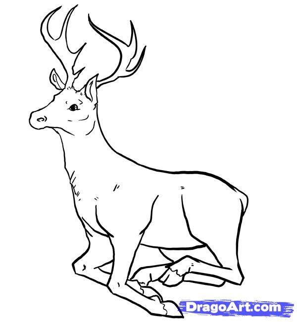 How to draw the Deer with a pencil step by step