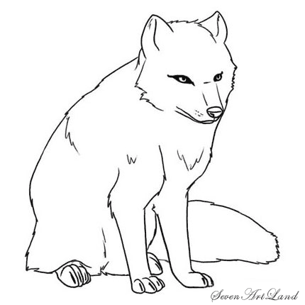 How to draw a polar Fox with a pencil step by step