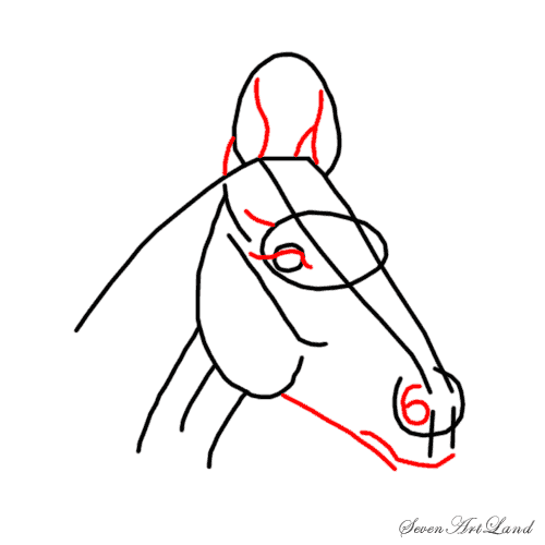 How to draw the Horse with a pencil step by step 4