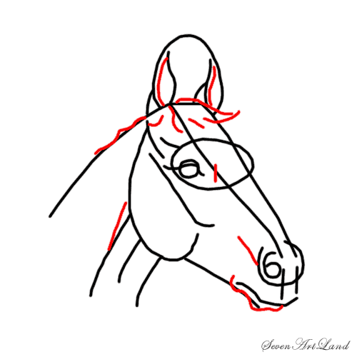 How to draw the Horse with a pencil step by step 5