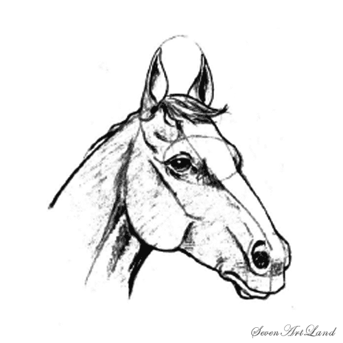 How to draw the head of a horse with a pencil step by step